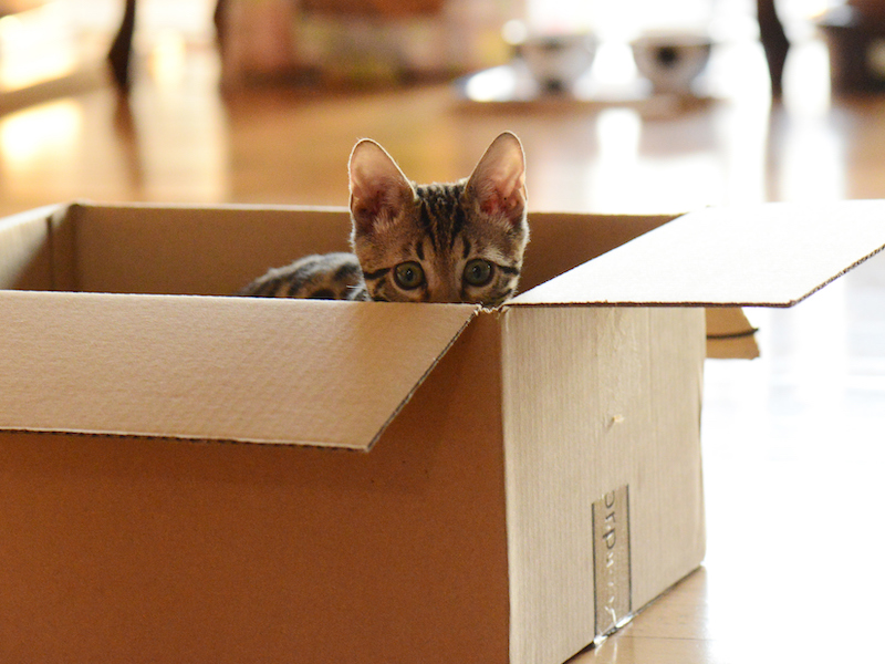 Moving Home with your Cat